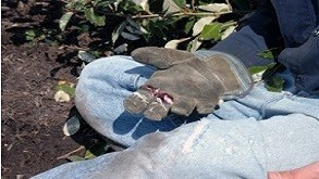 Bloodborne Pathogens: Just The Facts